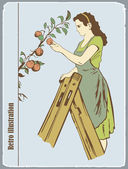 The woman gathers apples — Stock Vector