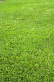 Mown lawn — Stock Photo