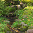 Stock Photo: Stream among stones in autumn park