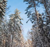 Snow covered winter wood — Stockfoto