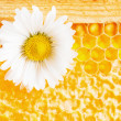 Daisy on a background of honeycombs — Stock Photo