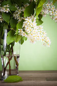 Bouquet of a blossoming bird cherry in a vase on a table — Stock Photo