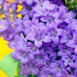 Campanula blue a close up — Stock Photo
