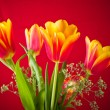 Bouquet of yellow-red tulips on a red background — Stock Photo