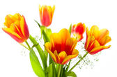 Bouquet of yellow-red tulips, it is isolated on white — Stock Photo