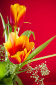Ramo de tulipanes amarillo-rojo sobre un fondo rojo — Foto de Stock