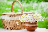 Bukiet stokrotek w garnku na stole na piknik — Zdjęcie stockowe