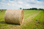 Round hay bales on a meadow — Stock Photo