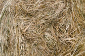 Close-up shot of a large bail of hay — Stock Photo