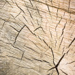 Transverse cutting of an old dry wood — Stock Photo