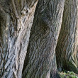 Trunks of old trees a close up — Stock Photo