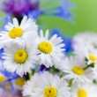 Bouquet of daisies and cornflowers close-up — Stock Photo