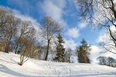 Winter landscape in the park. Sunny Day — Foto de Stock