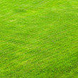 Trimmed green lawn, a background — Stock Photo