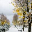 Alley in Park later in autumn. Snow storm — Stock Photo #38207095