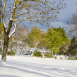 Stock Photo: Autumn park after snow storm