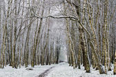 Alley in the Park later in the autumn. First snow — Stock Photo