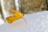 Yellow maple leaf on snow, close-up — Stockfoto