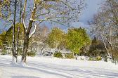 осенний парк после снежной бури — Стоковое фото