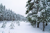 Winter landscape in the forest snowbound — Foto Stock
