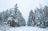 Winter landscape in the forest snowbound — Foto de Stock