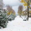 Alley in Park later in autumn. Snow storm — Stock Photo #38622725