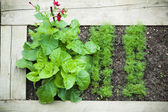 Bett mit pflanzen, draufsicht — Stockfoto