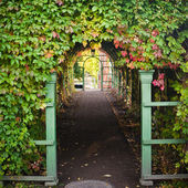 Branches of virginia creeper ramble on archway — Stock Photo