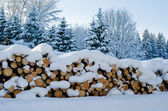 Trunks of felled trees and stacked pile — Stock Photo