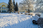 Park in Sillam??e sunny frosty day. — Photo