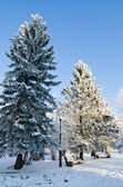 Trees covered with hoarfrost in city park — Stock Photo