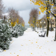 Alley in Park later in autumn. Snow storm — Stock Photo #40135669
