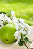 Green apple with a branch of a blossoming apple-tree close-up — Stockfoto