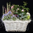 Colorful bouquet of various flowers in a wooden basket — Stock Photo