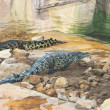 Stock Photo: Several crocodiles in aviary at farm