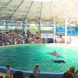 Spectators on representation in the dolphinarium Eupatorium. Ukr — Stock Photo