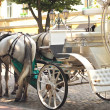 Horses drawn carriage on summer city street — Stock Photo #29129539