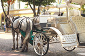 Horses drawn carriage on summer city street — Stock Photo
