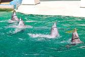 Dolphins twist the rings on water show — Stock Photo