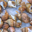 Sea shells are sold in the market — Stock Photo
