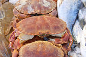 Sales of fresh crabs on the market — Stock Photo