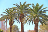 Palm trees on the streets of Las Vegas. Nevada — Stock Photo