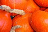 Pumpkin sale on the Dutch market — Stock Photo