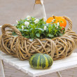 Decorative basket of flowers and pumpkins on a chair — Stock Photo