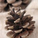 Pine cone — Stock Photo #12745407