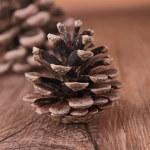 Pine cone — Stock Photo #12756799