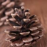 cono del pino — Foto de Stock   #12756818
