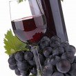 Isolated red wine — Stock Photo