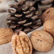 Walnuts and pine cone — Stock Photo