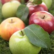 Stock Photo: Abundance of apples